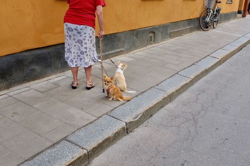 Low section of woman with dog walking on footpath