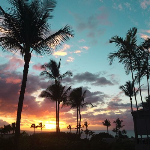 Silhouette palm trees at beach against sky during sunset