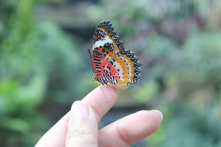 Animal Themes Animal Wildlife Animals In The Wild Butterfly Butterfly - Insect Close-up Day Focus On Foreground Fragility Freshness Holding Human Body Part Human Hand Insect Nature One Animal One Person Outdoors Perching Real People