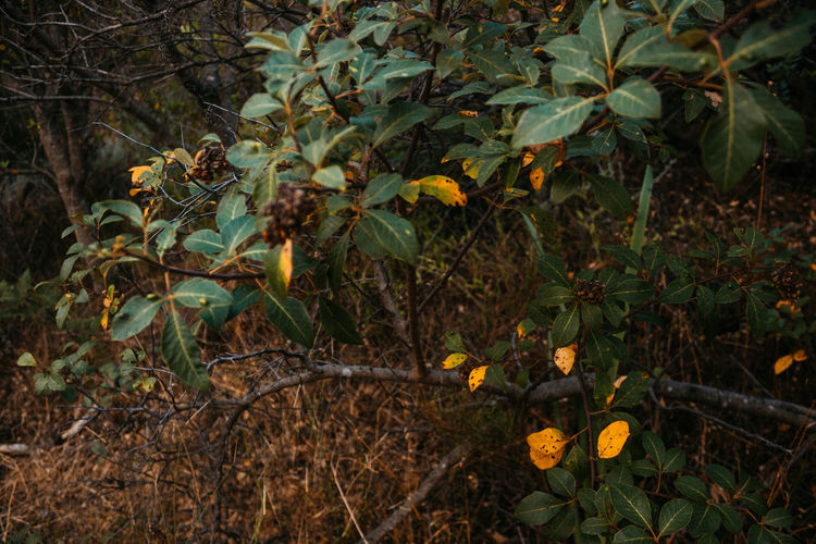 Close-up of yellow flowering plants growing on land