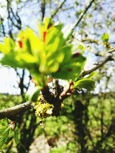 Nature Growth Animal Themes Outdoors Animals In The Wild Springtime Insect Day One Animal Close-up Tree Beauty In Nature Green Color Low Angle View Bee No People Fragility Pollination Branch Freshness