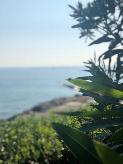 Sea Water Plant