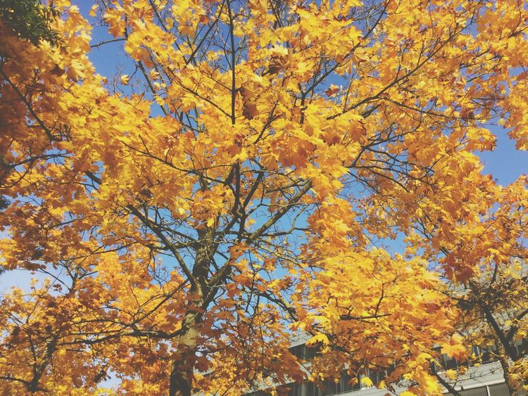 OSNABRUECK (GER), 2015 Autumn Fall Autumn Leaves Autumn Colors Fall Colors Fall Beauty Nature Naturelovers Tree Trees Bäume German Cities Städte