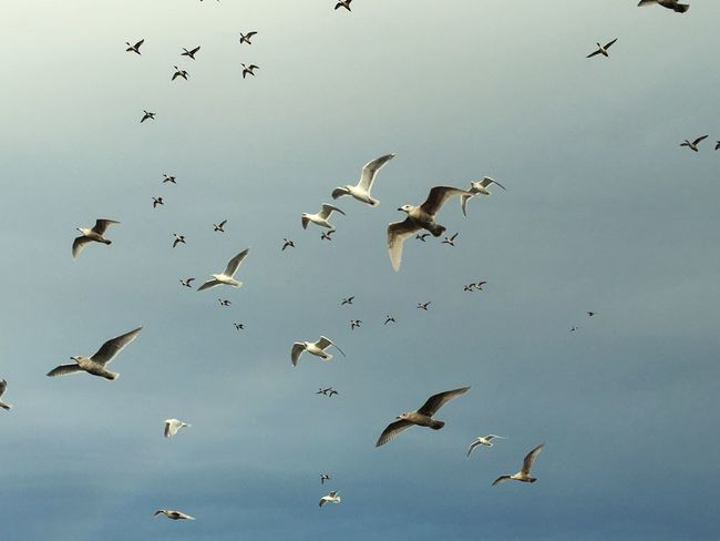 Seagull storm