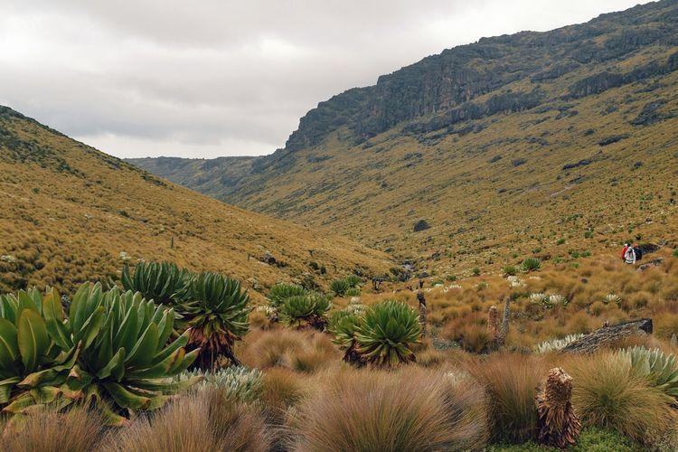A group of hikers in the panoramic mountain landscapes of mount kenya