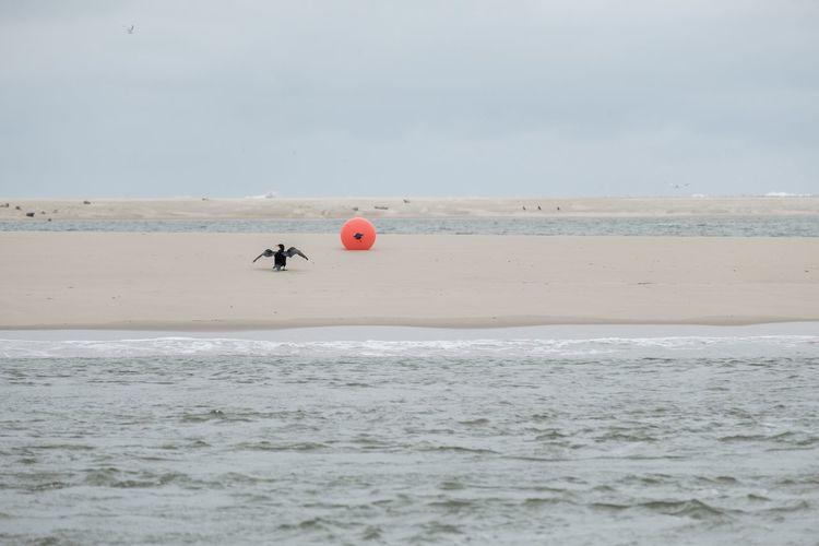 Vogel Yoga Sea