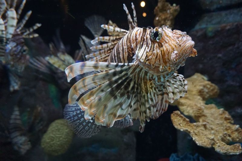 Fish 🐠 EyeEm Selects Animals In The Wild Sea Animal Wildlife Underwater Water Animal Animal Themes Sea Life UnderSea Marine One Animal Fish Swimming Vertebrate Nature No People Close-up Animals In Captivity Focus On Foreground