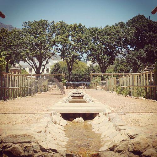 Salk ? @ Company Gardens Capetown
