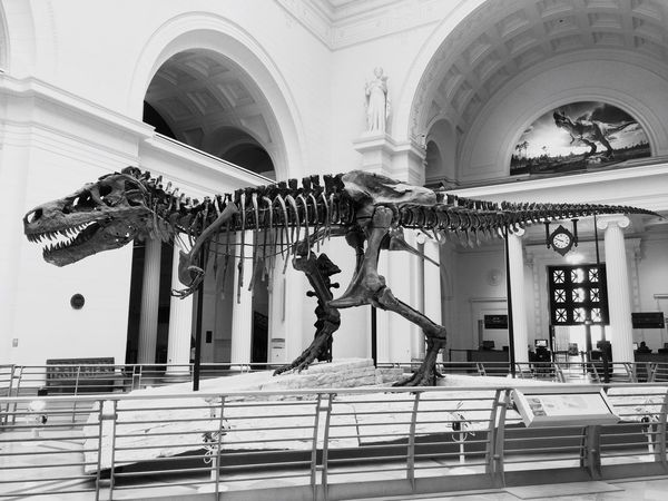 Blackandwhite Dinosaur Museum EyeEm Model Prehistoric Fresh On Eyeem  Walking Around Hello World IPhoneography EyeEm Gallery Check This Out Taking Photos