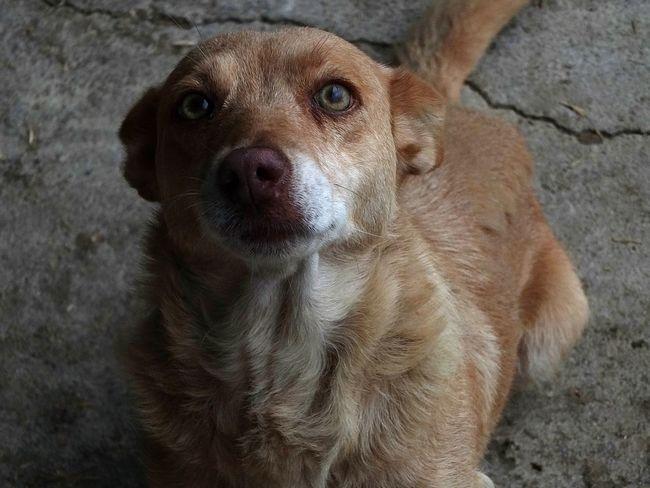 Taking Photos Hello World EyeEm Open Edit Dog Pets Cute Dog Eyes EyeEm Best Shots