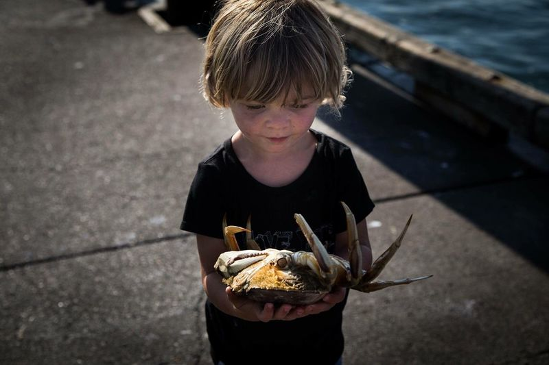Child holding a crab