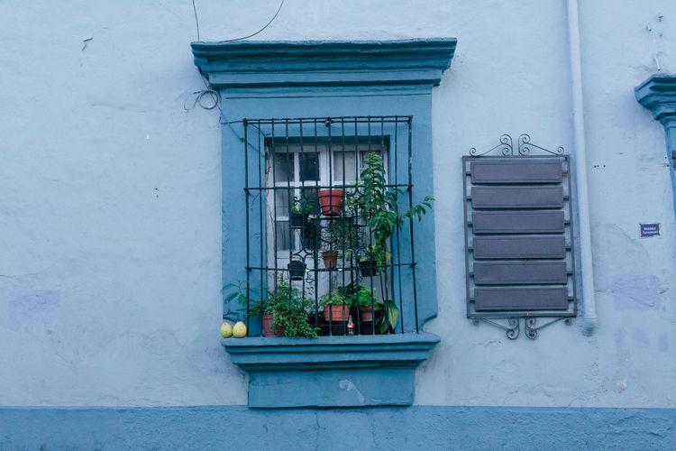 Oaxaca Plants Architecture Building Exterior Built Structure City Door Plantssims Texture Window Windows_aroundtheworld