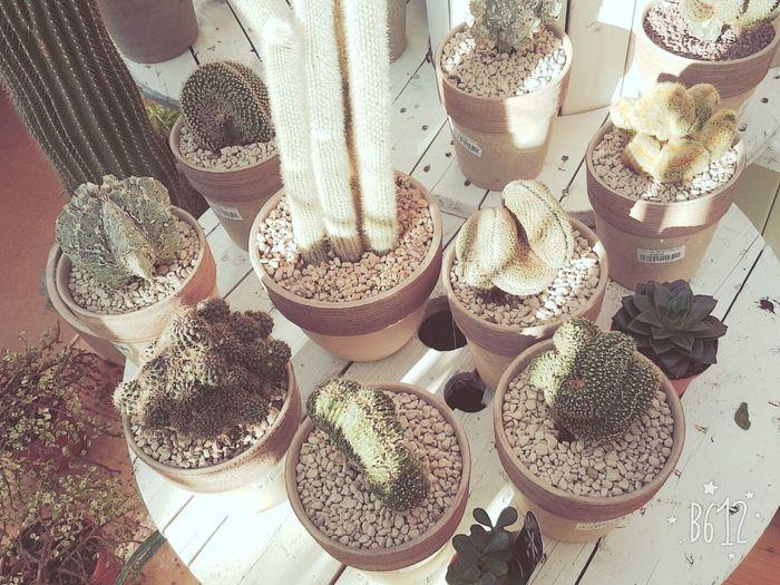 🌵 🌵🌷🌵Sexta🌵🌷🌵 🌵 Cactus 🌵🌵 Brr 🌵f🙊 Yuu N The Shawtys Yuu Came Wit