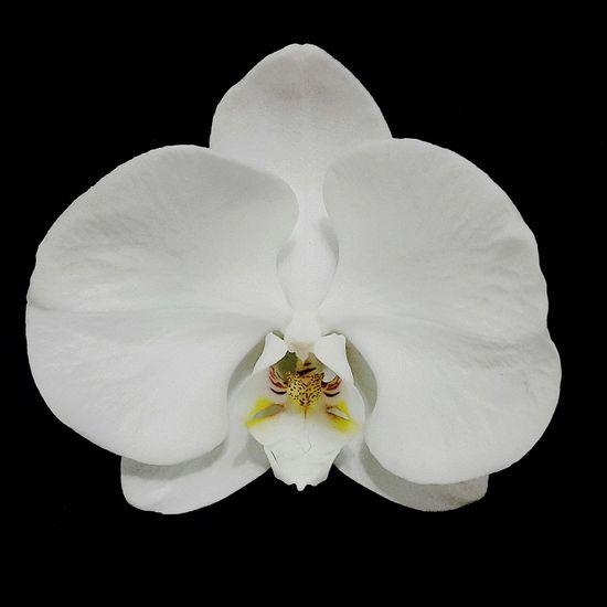 Flores Orquideas Piracicaba Vida Plantas Orquidário Life Photography Belezanatural Beleza