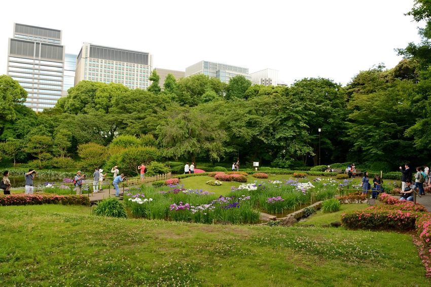 Imperial Palace Garden Imperial Palace Tokyo Day Flower Fun Garden Photography Grass Green Color Growth Large Group Of People Outdoors Park - Man Made Space Plant Tree