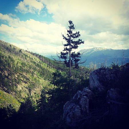 Passeggiata per il Monte Montagna Laquila abruzzo boschi green nature