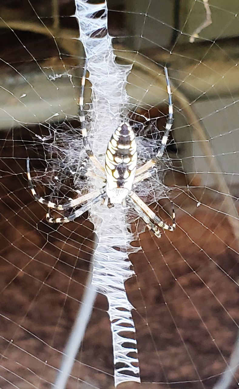 HIGH ANGLE VIEW OF SPIDER WEB
