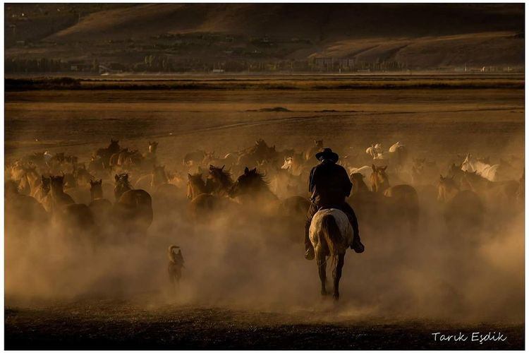 Be. Ready. Horse Outdoors Animal Themes Dust Running Horseback Riding People Sports Race Rural Scene Adult Domestic Animals One Person American Bison Mammal Adults Only Day Only Men first eyeem photo