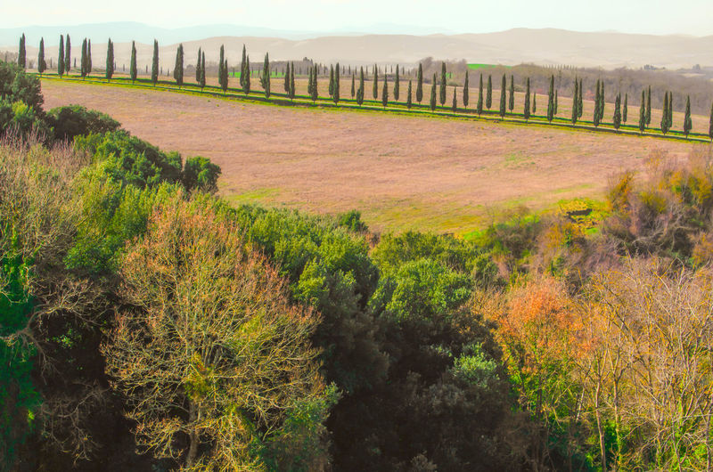 Cypress Trees and Field in Tuscany, Italy. Agriculture Cypress Cypress Tree Road Sunny Tuscany Day Environment Famous Place Field Growth History In A Row Land Landscape Nature No People Outdoors Plant Scenics - Nature Tranquil Scene Tranquility Travel Destinations Tree Tree Area
