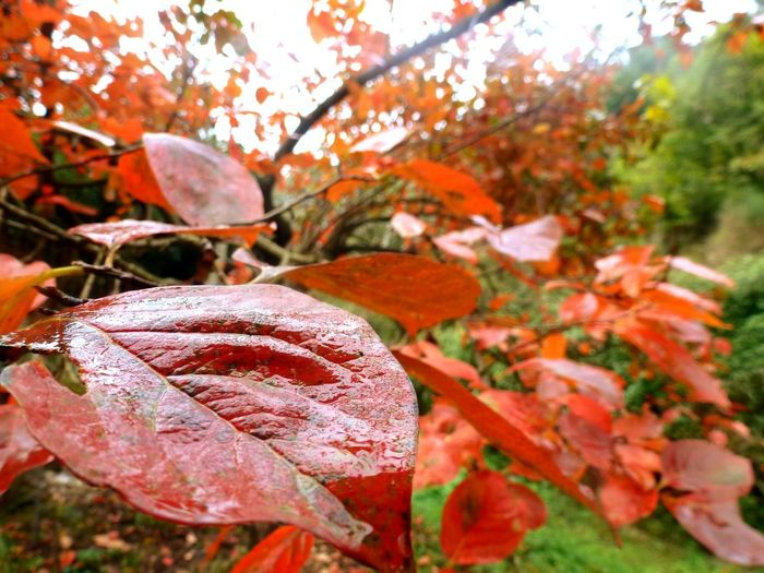 """For this I much prefer autumn ti spring, because in autumn watching the sky. In the spring the ground.""Fall Beauty Fall Red Leaves Rain Tree Wet Ground Autumn Leaves Autumn Colors Autumn🍁🍁🍁"
