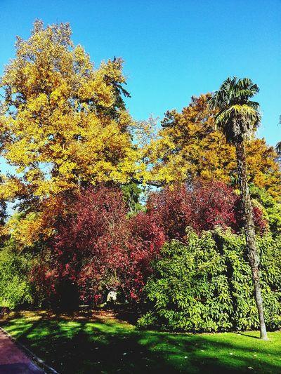 Autumn Colors Relaxing Enjoying Nature Enjoying Life Hugging A Tree