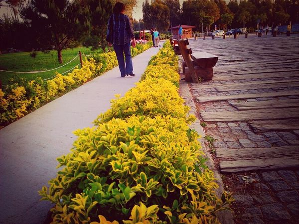 Beautiful Nature    #rose #beauty #nature #flower #love #eyeem #sun Sasalı Doğal Yaşam Parkı Road, Green, Flower