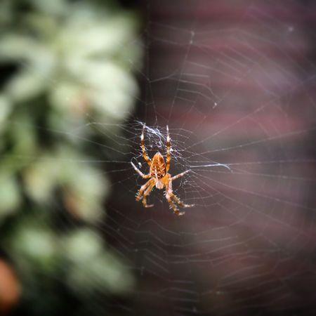 Spider Closeup Canont3i DSLR Instaspider Behindthescenes Parkour Filmaker