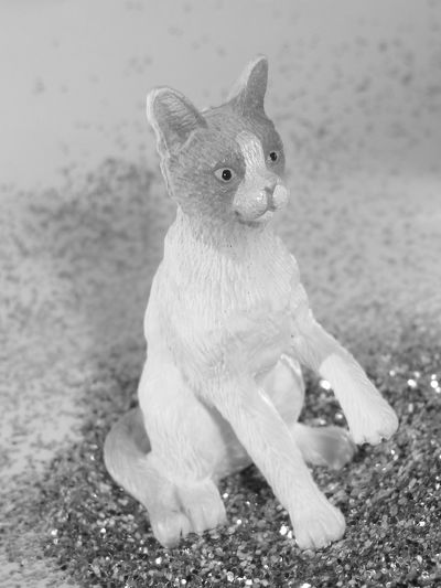 cat in glitter 2 Animal Animal Themes Day Domestic Animals Focus On Foreground Loyalty Mammal No People One Animal Pets Whisker Zoology