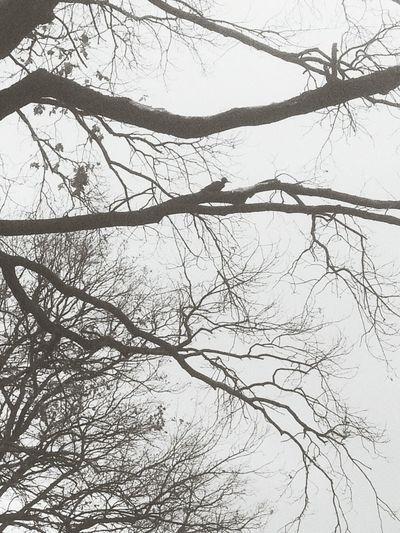 Bird Hi! TreePorn Bird Lonely Nights First Eyeem Photo