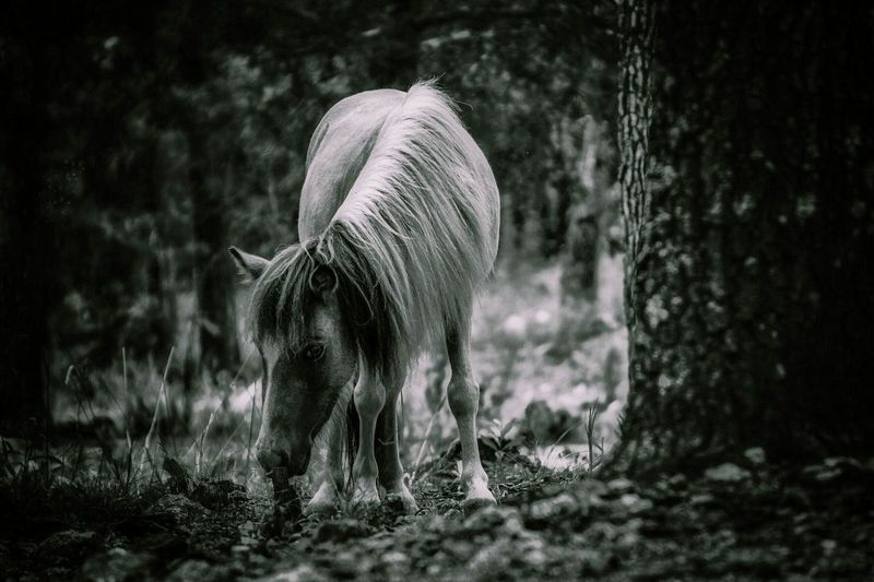 Miniature horse by tree in forest