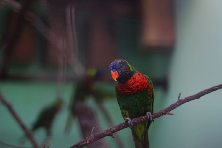 Birds Park - Man Made Space Nature Multi Colored Beauty In Nature Animal Themes Bird Parrot No People