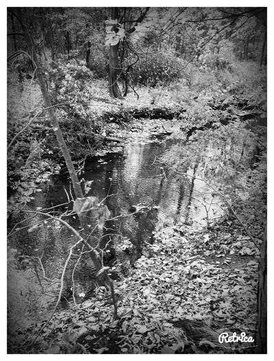 Creek A Walk In The Woods Bored Blackandwhite