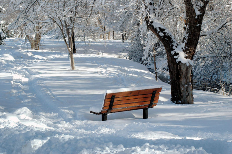 Empty bench on snow covered land in colorado usa