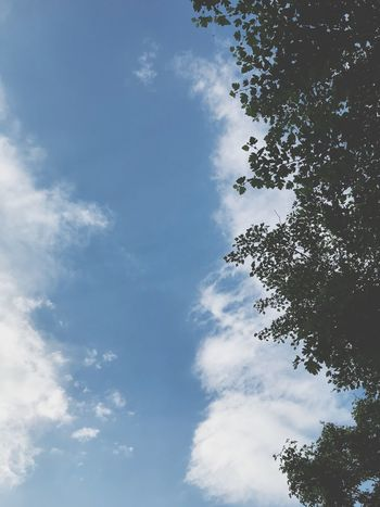 Sky Cloud - Sky Low Angle View Plant Tree No People Nature Tranquil Scene Branch Tranquility Blue Silhouette Scenics - Nature Outdoors Beauty In Nature Treetop Idyllic Day Growth Leaf