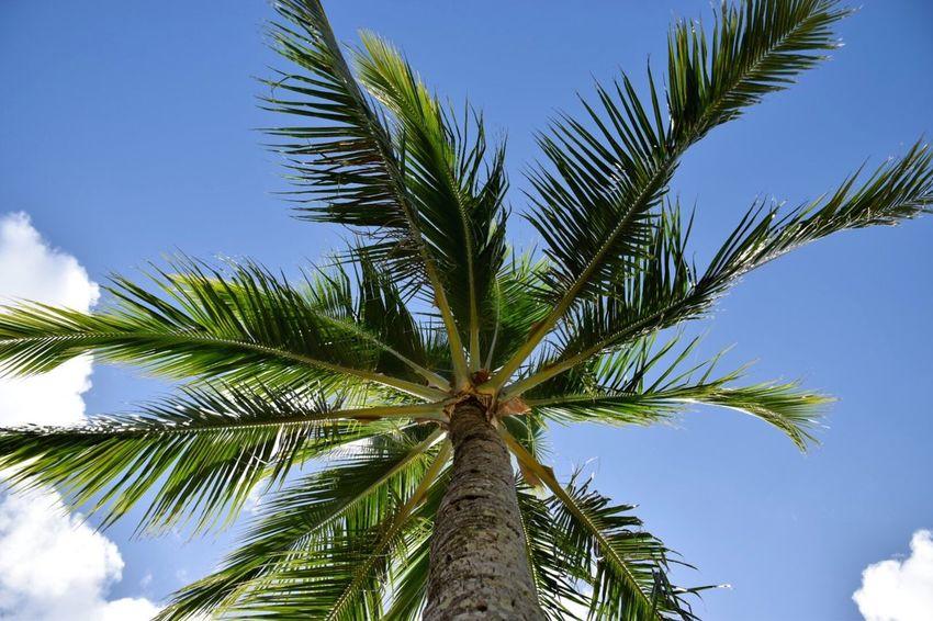 Holidays Tahiti Beatiful NIKON D5300 Palm Trees