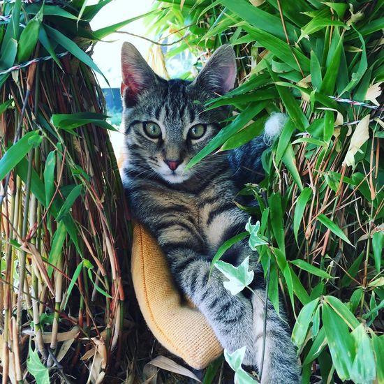 Domestic Cat Animal Themes Domestic Animals One Animal Pets Feline Mammal