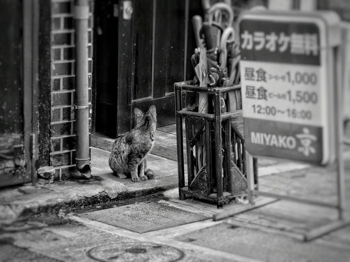One day's cat.