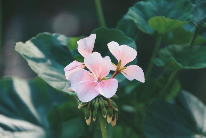 VSCO Vscocam Pink Flower Flowers Green Photography Relaxing Nature สลั่ว SmallFlowers