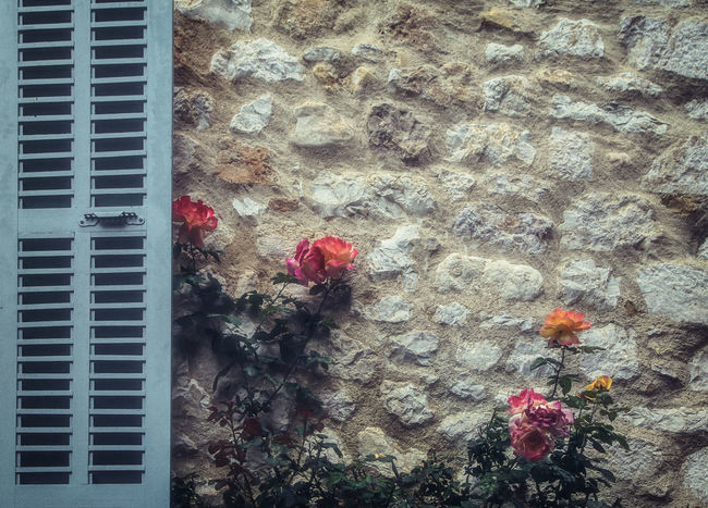 Animal Animal Themes Architecture Built Structure Close-up Day Directly Above Flower Flowering Plant Growth High Angle View Leaf Nature No People Outdoors Petal Plant Plant Part Red Window The Great Outdoors - 2018 EyeEm Awards