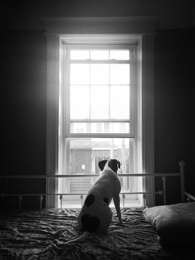 Rear view of dog sitting by window at home