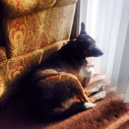 Cleo ✨☀️ EyeEm Animal Lover A Dogs Life My Dog Dog Days