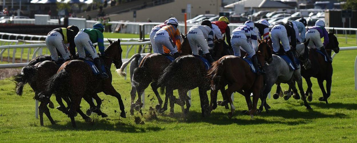 Bottoms up Horse Racing Competition Field Men Togetherness Horseback Riding Horse Grass Livestock