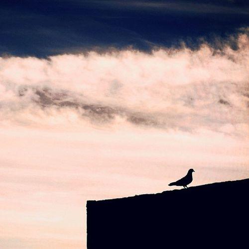 El ave sobre el muro. Bird Blackwall Sky Justamoment naturalgift shadow