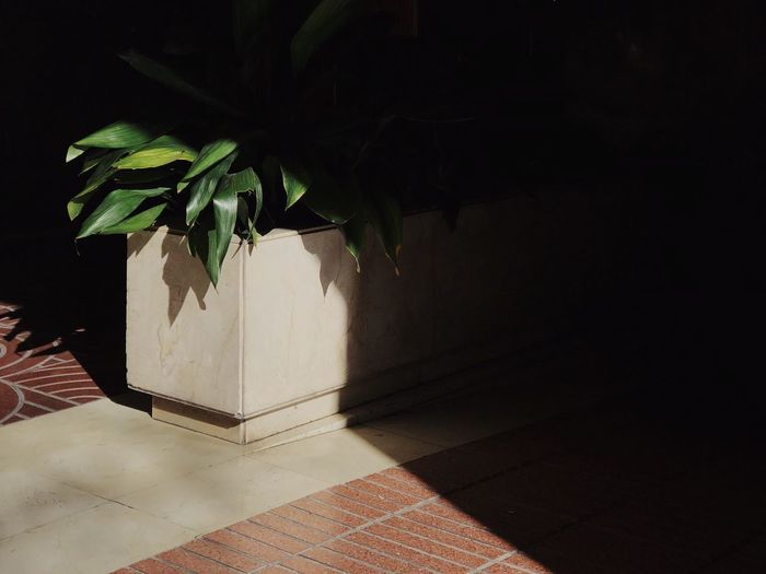 High angle view of potted plant on tiled floor