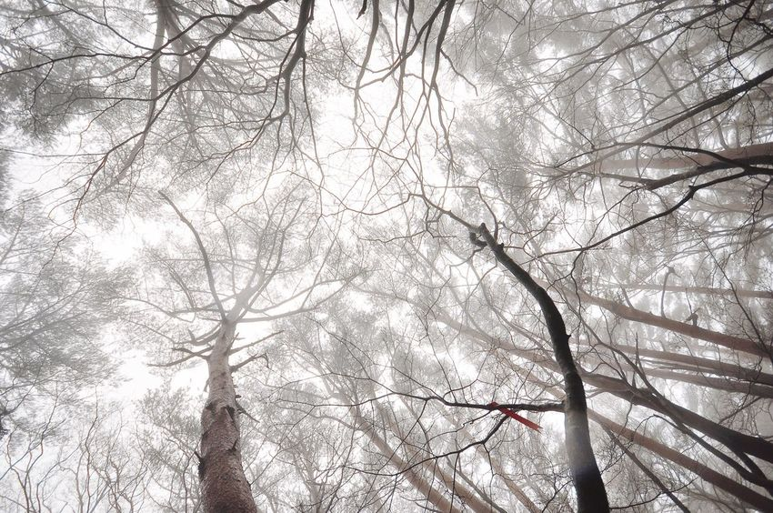 In the cloud / jeju . EyeEmNewHere In Cloud Dreamy Dawn Bare Tree Low Angle View Beauty In Nature Forest Tree Nature