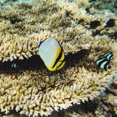Tropical Underwater Sea Life Animal Themes UnderSea Coral Sea Lagoon Snorkeling Swimming