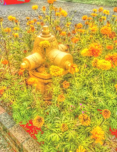 Fsncy Dogbathroom Ladies Only  Flower Collection Pretty Fire Hydrant Yellow Where Ate All The Red Ones? Shits And Giggles Dog Bathroom