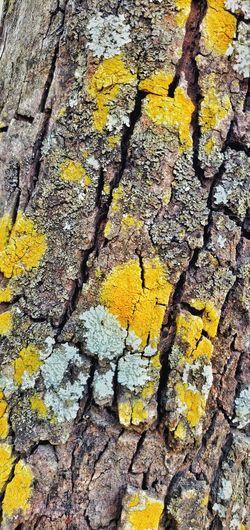 Full frame shot of yellow tree trunk