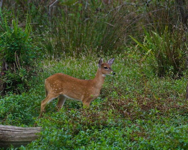 Side view of deer standing on field
