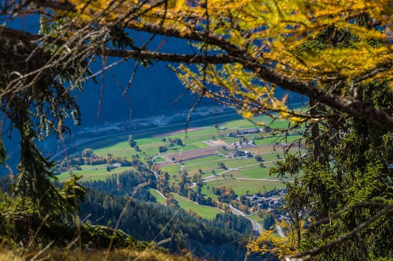 col of lien,valais,swiss Plant Tree Beauty In Nature Environment Nature Tranquility Mountain Landscape Scenics - Nature Growth No People Land Tranquil Scene Day Outdoors Branch Rural Scene Sky Green Color Non-urban Scene Change